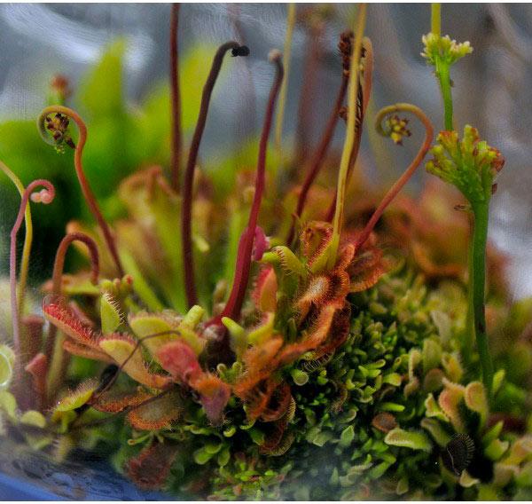 Se soigner en regardant les plantes, fantasme ou réalité ?